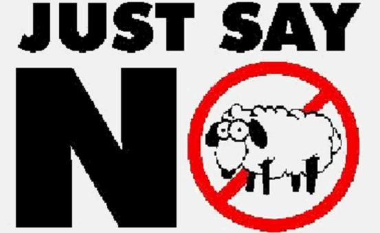 Sheep just say no 560