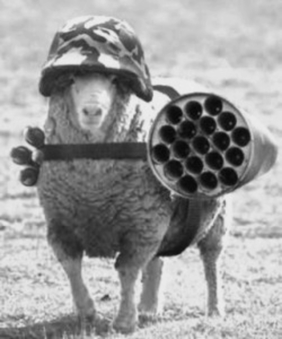 Well armed sheep BW 560