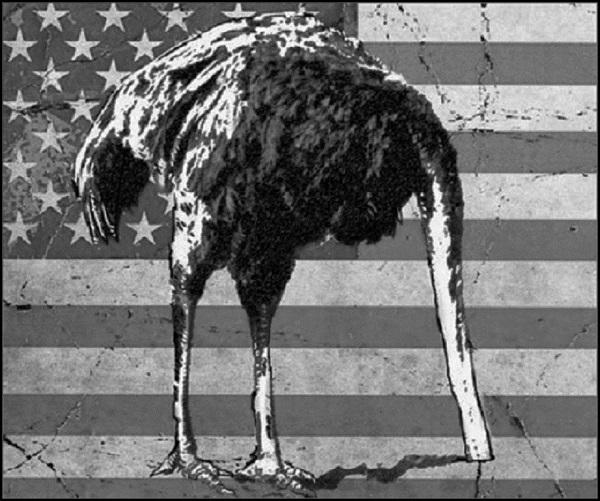 Emu Ostrich BORDER 600