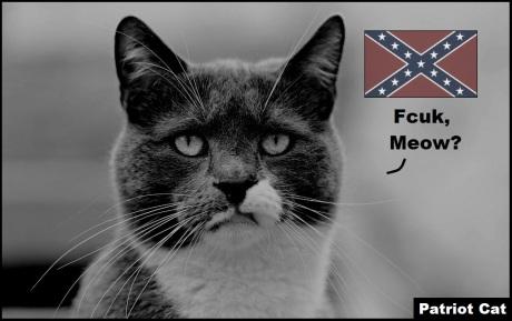 Confederate Patriot Cat